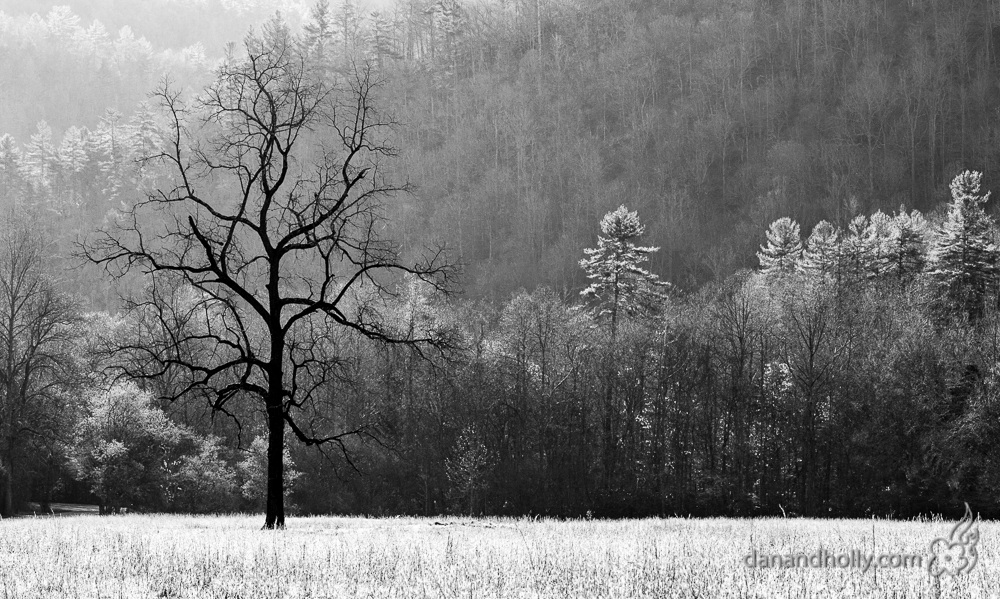POTW: The Cataloochee Tree