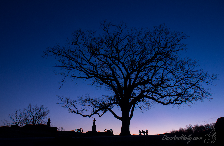 Devils Den Witness Tree