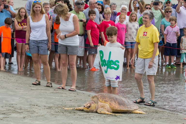 Boyles the Loggerhead Sea Turtle