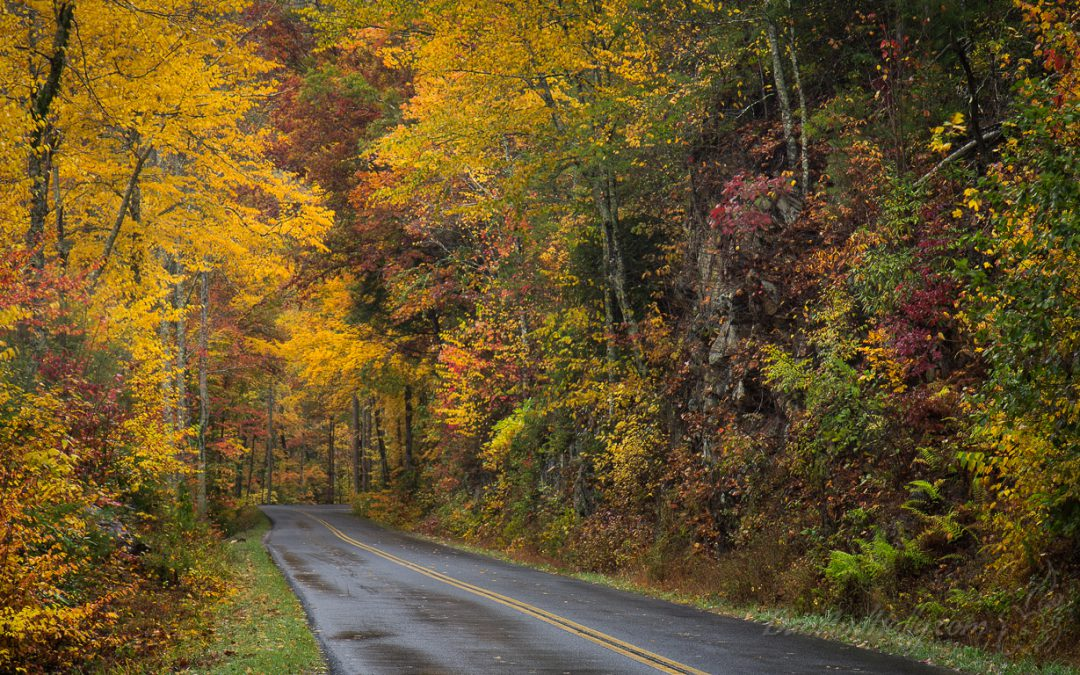 The Road to Fall Colors