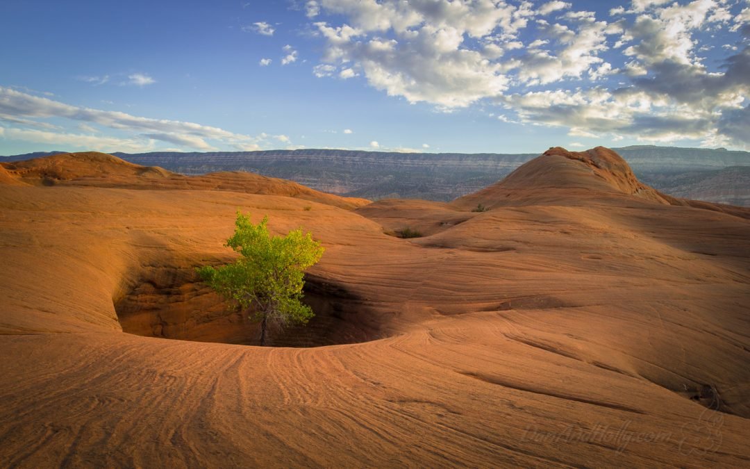 Silence in the Desert