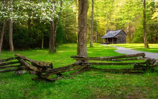 Carter Shields Cabin in Spring Greens