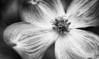 POTW: Pink, in black and white