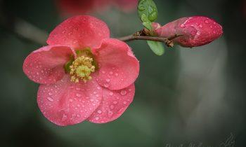 Spring Flowers in Macro