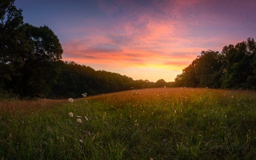 A New Adventure – Introducing the Thompson Farm