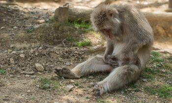 Monkeys Looking at Things