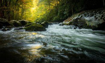 Autumn in the Streams