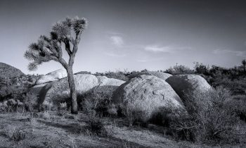 A Study of Joshua Tree National Park in Black and White