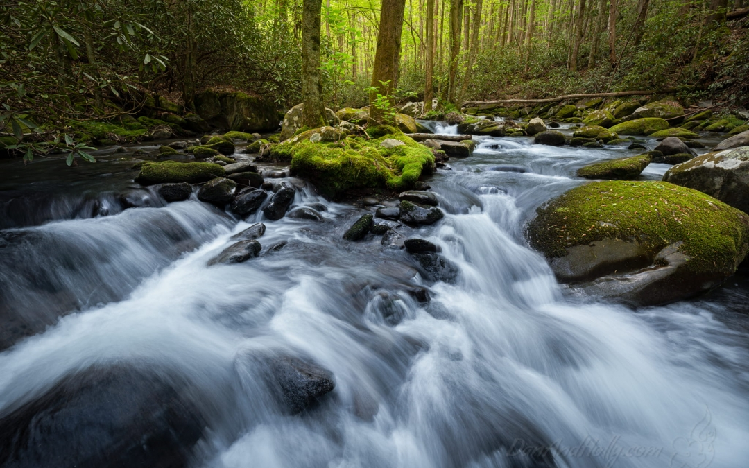 A Full Stream with Spring Greens