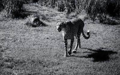 Meeting the Cheetahs at Ashia Cheetah Sanctuary