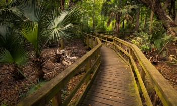 Hilton Head Walkways