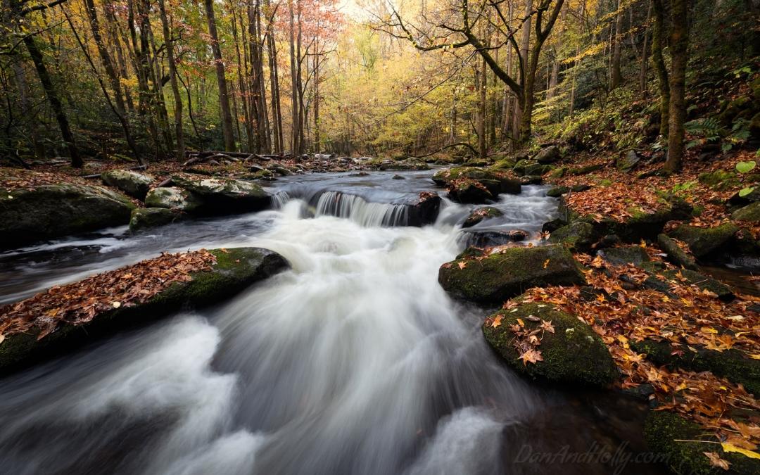 2020 Autumn Stream Scene Extravaganza